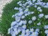 0904_blue_d1