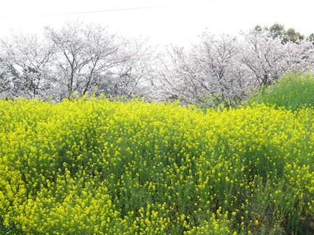 1604_fukuchi_1993