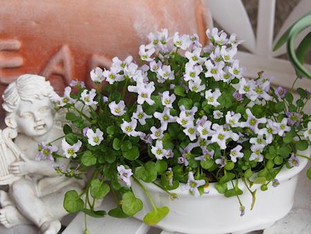 1603_violet_p0026_