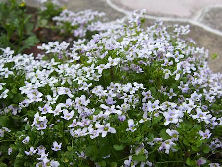 1603_violet_p0062_