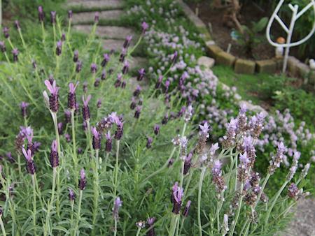 160502_lavender_p0094_